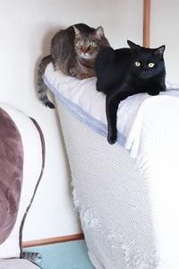 ワックスがけ前に張り切る猫 - きょうだい猫と仲良し暮らし