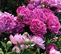 Flowers in town. 街角の花々 - 流木民