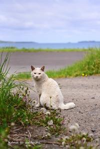 海憧の庭で - 礼文島★ハナとわたし