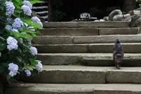 初夏の三浦アルプスを歩くその1 - 季節(いま)を求めて