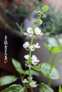 我が家のハーブ~ローズマリー&ペパーミントの花 - ♪Princess Craft  素敵女子の集い