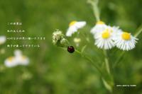 この世界 - Poetry Garden 詩庭
