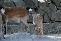 赤ちゃんラッシュと初めての - 動物園に嵌り中