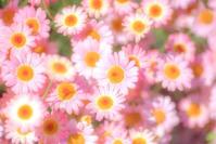 Mignon - Une fleur