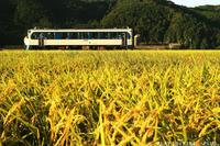 のんびり新幹線 - PTT+.