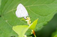 またまた蝶を・・・ - takiのカメラ散歩~☆