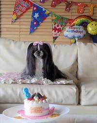 2018.5月SAKURA、8歳のお誕生日 - さくらひめほっこり日和