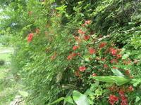 梅雨の晴れ間 - 宮迫の! ようこそヤマボウシの森へ