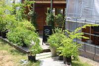 水色のクレマチス♪ - HOME SWEET HOME ペコリの庭 *