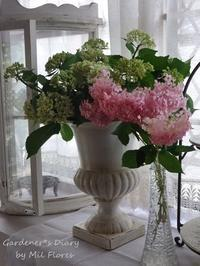 Mis hortensias. - Gardener*s Diary