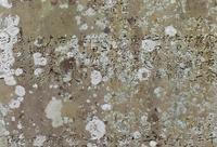 石に刻む - ふらりぶらりの旅日記