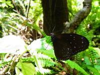蝶々 - 生物観察