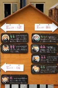 初夏の旭山詣・その1 - レッサーパンダ☆もふてく放浪記