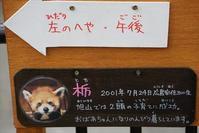 初夏の旭山詣・その6 - レッサーパンダ☆もふてく放浪記