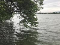 Mammyの絨毯爆撃 - WaterLettuceのブログ