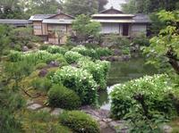 2008半夏生 建仁寺両足院 - MOTTAINAIクラフトあまた 京都たより