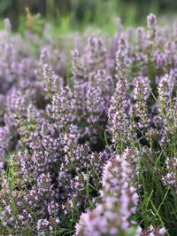 花盛り - ぬるぅい畑生活