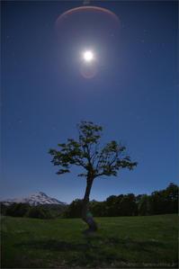 ゴースト - 遥かなる月光の旅