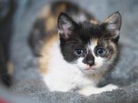 迷子の子猫ちゃん - 節操のない写真館