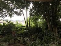 みどり尽くしのウチ庭<南北>「マイナスイオンが心地イイ」編 - ドライフラワーギャラリー⁂ふくことカフェ