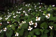 6.10(付録) - anemone