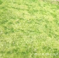 そうか!芝生の管理と片付けは一緒なんだ - モノも身の内