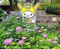 多摩川台公園 紫陽花 - そろそろ笑顔かな