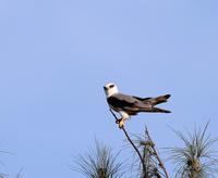 石垣島遠征(その5)・・・ - 一期一会の野鳥たち