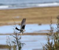 石垣島遠征(その6)・・・ - 一期一会の野鳥たち