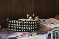 でかベッドのシロ子 - Black Cat Moan