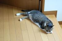 暑かった土曜日 - サバとタラ