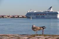 2015.08 ヘルシンキ バルト海とシリアライン - ゆらりっぷ -yurari trip-