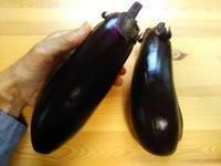 でっかい茄子、初収穫♪(南国畑) - 化学物質過敏症・風のたより2