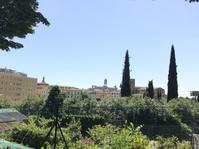 菩提樹の花香るシエナの初夏 - フィレンツェのガイド なぎさの便り