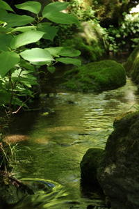 緑陰映す渓流 (撮影日:2018/6/8) - toshiさんのお気楽ブログ