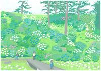 あじさい花菖蒲まつり - たなかきょおこ-旅する絵描きの絵日記/Kyoko Tanaka Illustrated Diary