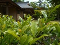 2018年7月の藤田記念庭園茶会開催のお知らせ - Tea Wave  ~幸せの波動を感じて~