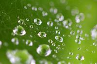 雨の日 - ふうりゅう日記