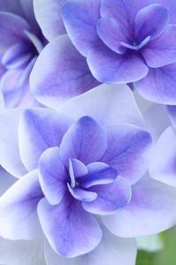 青紫色に惹かれて - 心 色