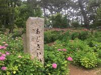 2018 06 10 お見舞いついでのアジサイリベンジ - soyokaze3の日記