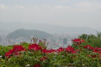 霞の風景 - かたくち鰯の写真日記2