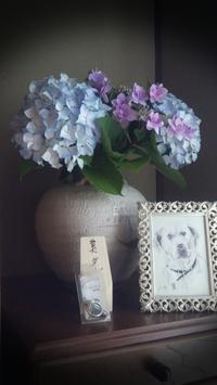 紫陽花 - 夕方に台所で・・・