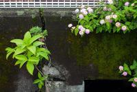梅雨の合間の散歩 - 緑と青と茶
