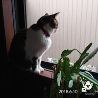 猫事情 - 柴わんことにゃん太郎