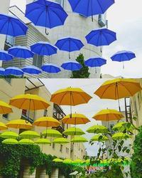 傘のリゾナーレ八ヶ岳 - ピースケさんのお留守ばん