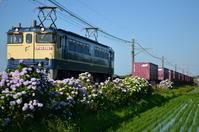 紫陽花と鹿島貨物 - 鉄道日記コム