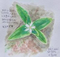 #ネイチャー・ジャーナル #Naturejournal 2018.5.16(水)晴@上高地 - スケッチ感察ノート (Nature journal)