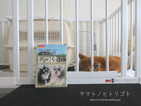 犬の本【今からでもおそくない!成犬のしつけQ&A】 - yamatoのひとりごと