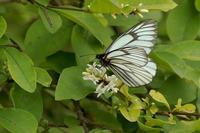 環境省レッドリスト2018のチョウ類の改訂まとめ - 登山道の管理日記