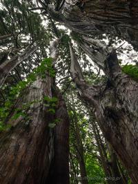 雨の森Ⅱ - デジタルで見ていた風景